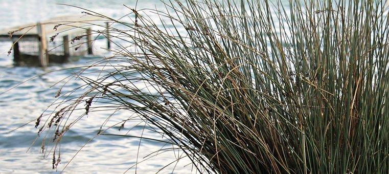 Lake, Reed, Web, Jetty, Nature, Grass, Winter, Plant