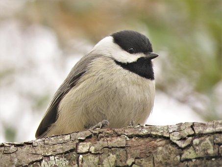 Bird, Wildlife, Nature, Outdoors, Animal, Cute