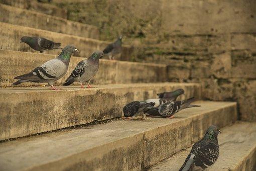 Bird, Stone, Old, Architecture, Nature, Beautiful