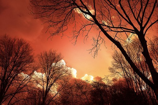 Tree, Silhouette, Sunset, Sky, Clouds, Bare Tree
