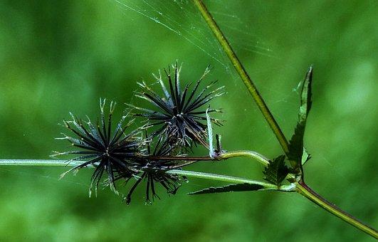 Nature, Flora, Leaf, Summer, Outdoors, Grass