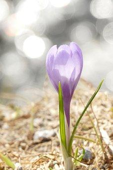 Nature, Plant, Flower, Season, Leaf, Light