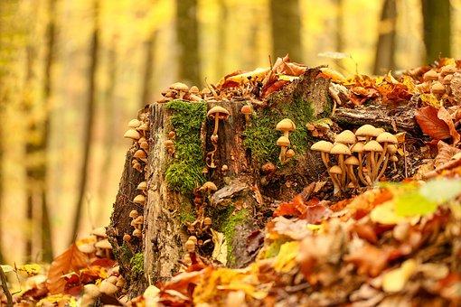 Fall, Leaf, Food, Nature, Wood, Season, Outdoors, Gold