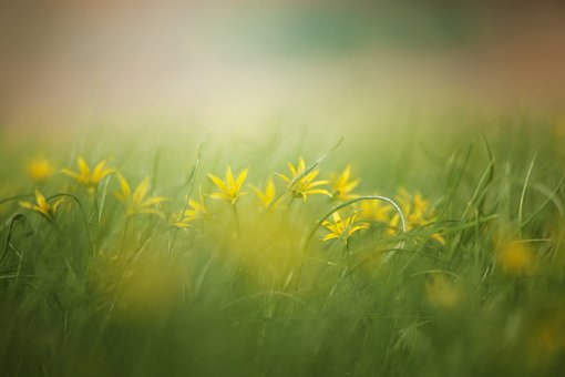 Grass, Nature, Haymaking, Field, Summer, Yellow Flowers