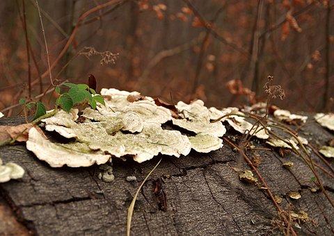Hub, Mushroom, Trunk, Tree, Forest, Moss, Lichen