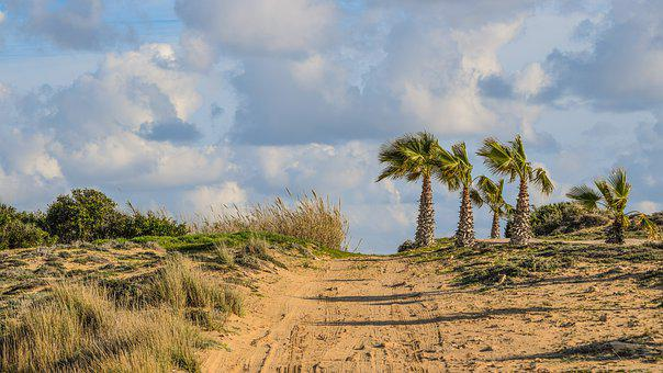 Dirt Road, Palm Trees, Landscape, Nature, Travel, Sky