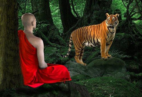 Nature, Outdoors, Portrait, Mammal, Monk, Meditation