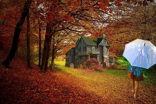 Tree, Fall, Nature, Wood, Leaf, Outdoors, Season, Grass