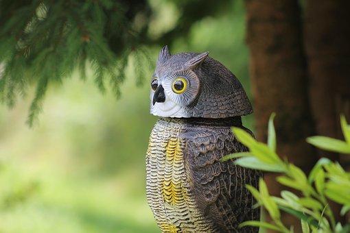 Nature, Animal World, Animal, Owl, Bird, Art, Forest