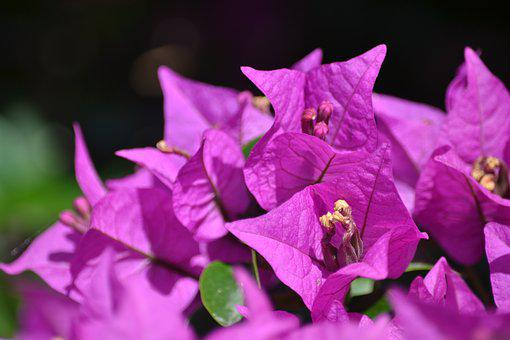 Flower, Purple, Plant, Nature