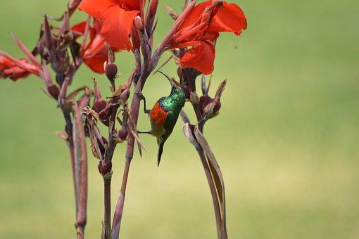 Flower, Nature, Flora, Leaf, Outdoors, Summer, Garden