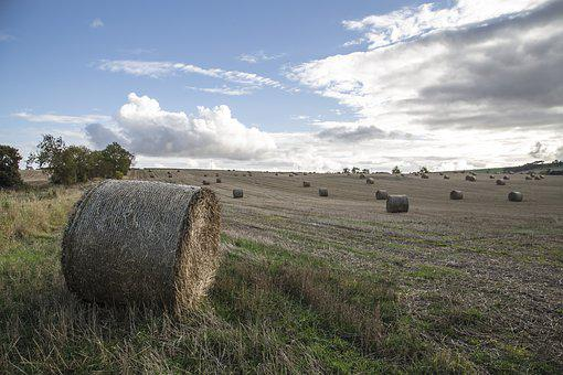 Field, Uk, Scotland, Hay, Pack, Rolls, Agriculture