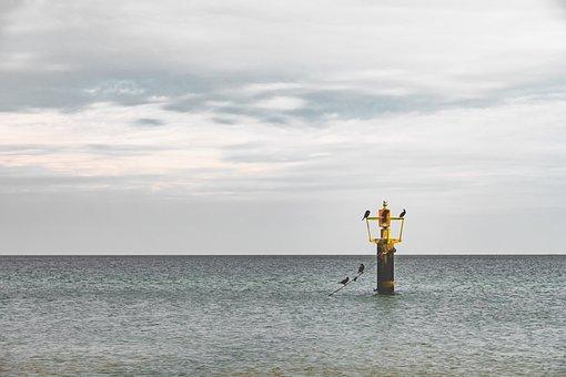 Sea, Birds, Pole, Nature, Water, Natural, Ocean, Animal