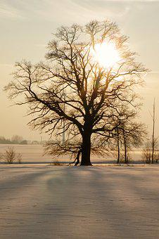 Tree, Sunset, Winter Impressions, Wintry, Snow, Cold
