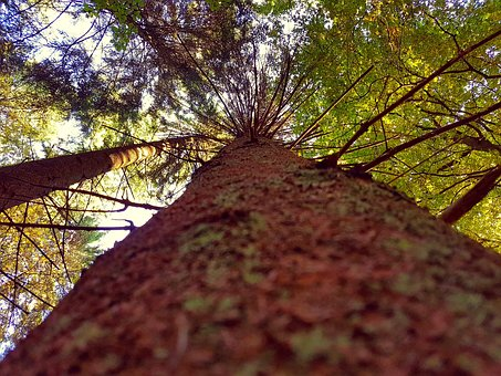 Tree, Crown, Bark, Forest, Nature, Aesthetic, Treetop