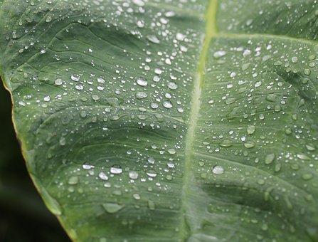 Rain, Drip, Green, Plant, Leaf, Water, Raindrop, Wet