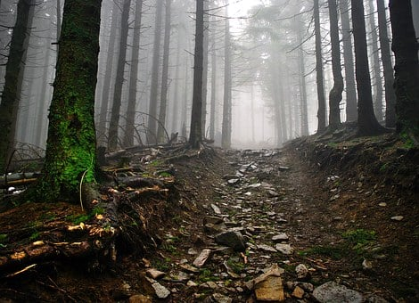 Way, Stones, Forest, The Fog, Mountains, Tree, Trail