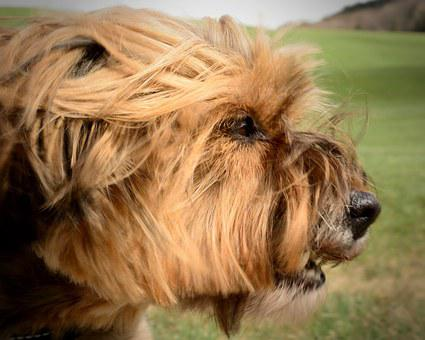 Dog, Head, Portrait, Face, Aggression, Mimic
