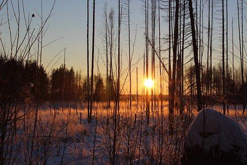 Dawn, Reflection, Nature, Wood, Tree, Sunset, Winter