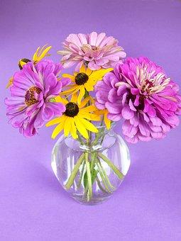 Flower, Nature, Petal, Plant, Floral, Dahlia, Sun Hat