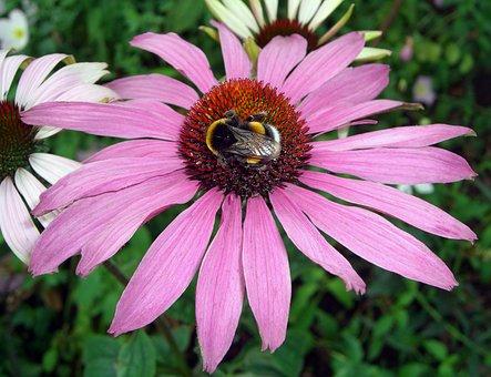 Flower, Violet, Bourdon, Plant, Nature, Garden