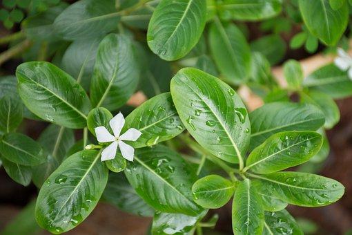 Leaf, Plant, Nature, Freshness, Approach, Garden
