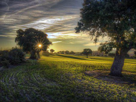 Tree, Landscape, Field, Nature, Lawn, Sun, Summer