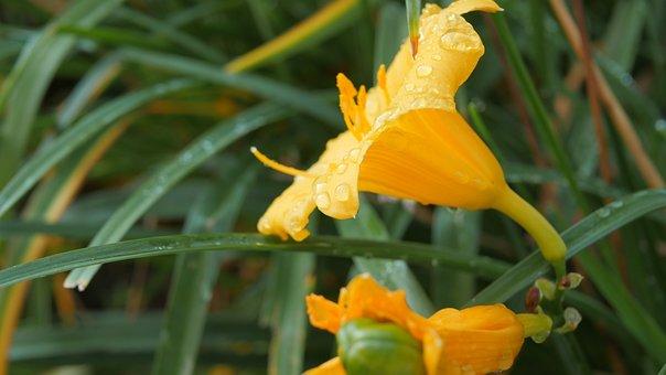 Nature, Flora, Flower, Leaf, Summer, Outdoors, Garden
