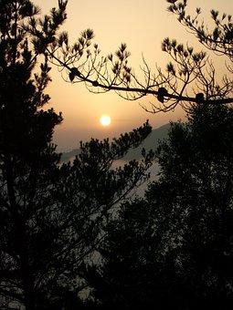 Tree, Nature, Silhouette, Dawn, Landscape