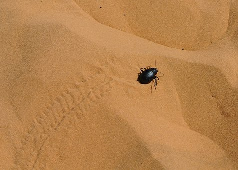 Desert, Sand, No Person, Outdoor, Invertebrate