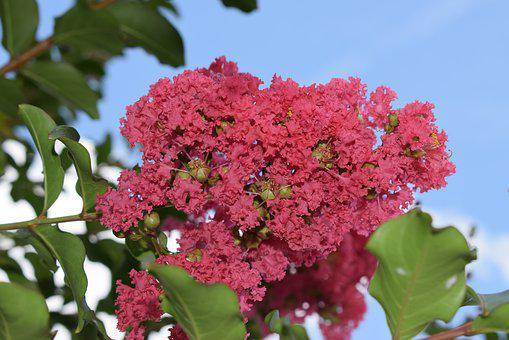 Flower, Flora, Nature, Tree, Branch, Blooming, Outdoors