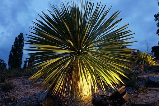 Nature, Tree, Palm, Plant, Tropical, Palm Tree