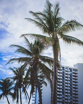 Palm, Holiday, Tropics, Beach, Sky, Sea, Landscapes
