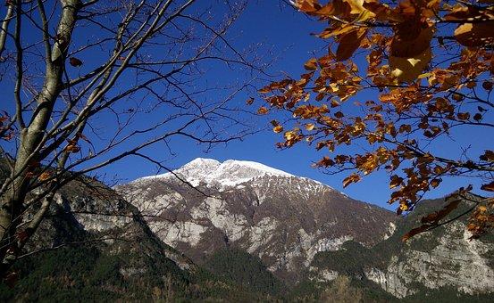 Tree, Nature, Landscape, Season, Outdoors, Blue Sky