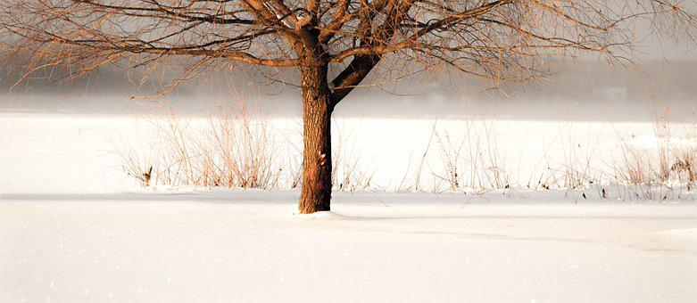 Wood, Nature, Winter, Tree, Cold, Snow, Frozen Lake