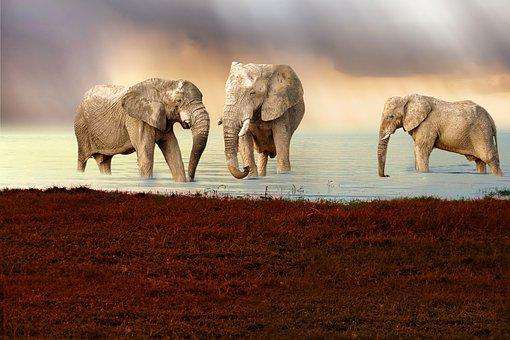 Elephant, Animal, Lake, Animals, Herd