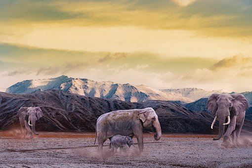 Elephant, Mountain, Dust, Animal, Animals, Landscape
