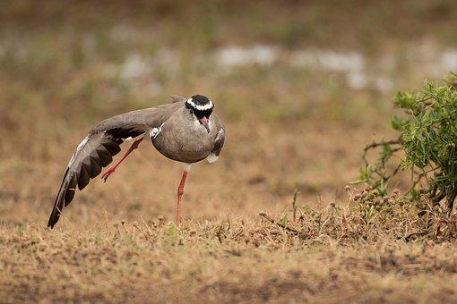 Animal World, Bird, Nature, Animal, Grass, Wild