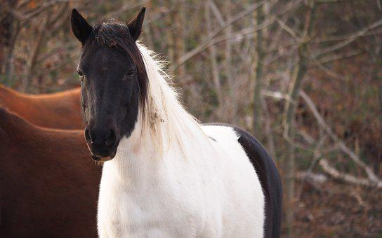 Nature, Animal, Horse, Portrait