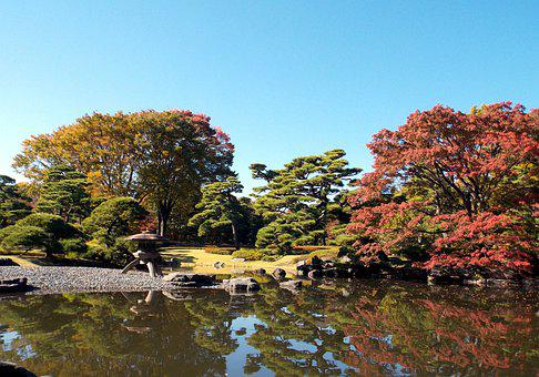 Nature, Tree, Autumn, Body Of Water, Leaf, Japan
