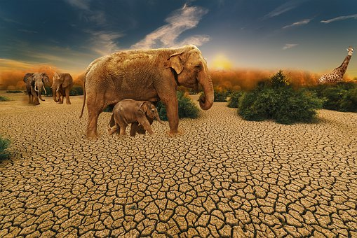 Elephant, Animal, Animals, Sand, Desert, Nature, Dry