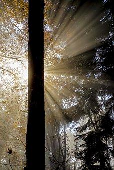 Nature, Back Light, Log, Rays, Sun, Forest, Autumn, Fog