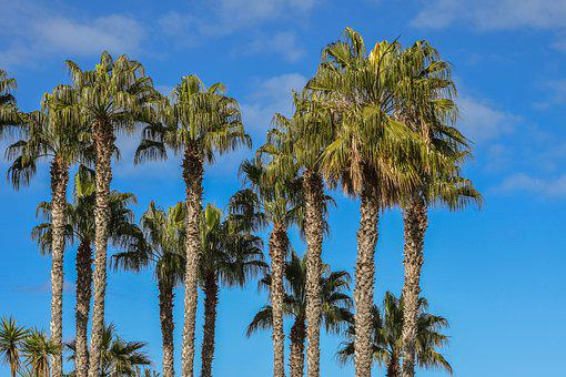 Palm, Trees, Tropical, Sky, Clouds, Exotic, Nature