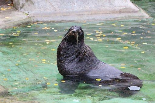 Water, Nature, Ocean, Swim, Sea, Seal, River, Mammals