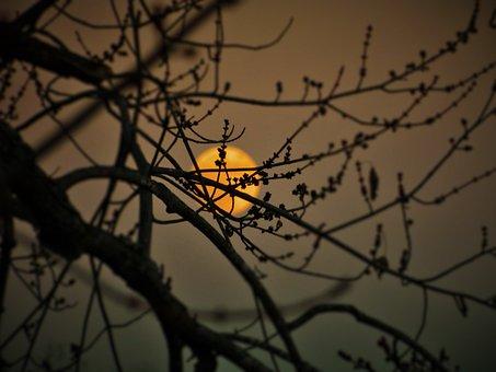 Spider, Spiderweb, Tree, Nature, Bird