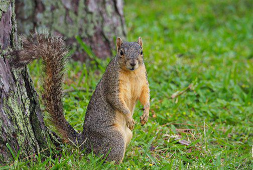 Nature, Animal World, Mammal, Squirrel, Cute, Rodent
