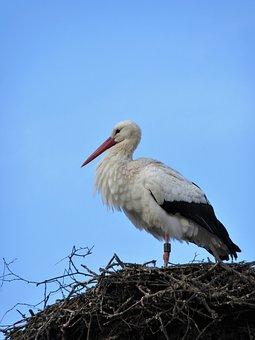 Stork, Bird, Nest, Animal World, Nature, Plumage, Sky