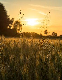 Sunset, Field, Sun, Nature, Cereals, Landscape, Wheat