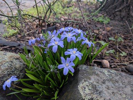 Nature, Flower, Plant, Leaf, Park, Wild, Floral, Color