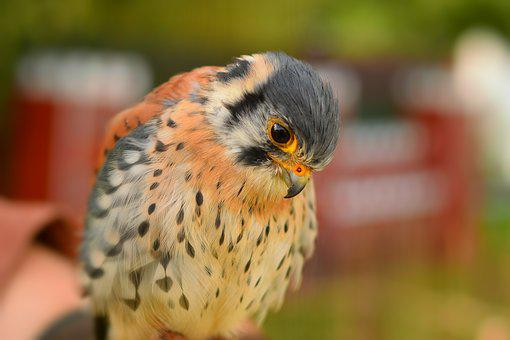 Animal World, Nature, Bird, Animal, Wild, Small